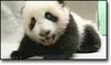Pandaweeklyexam11205